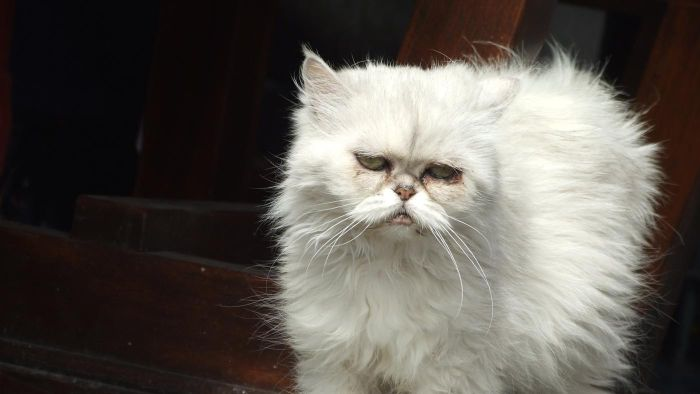What Causes Chronic Diarrhea in Cats?
