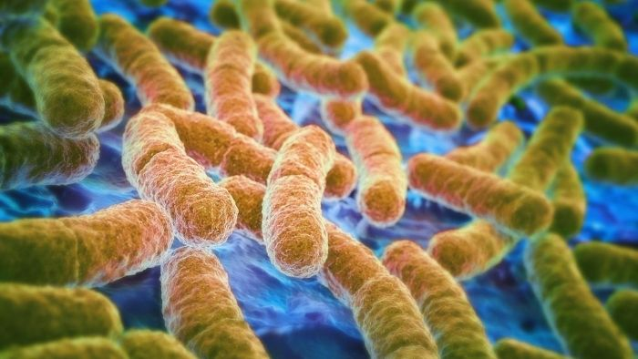 What Are the Causes and Symptoms of E. Coli?