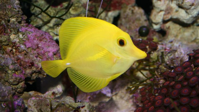 What Are Some Characteristics of Fish?