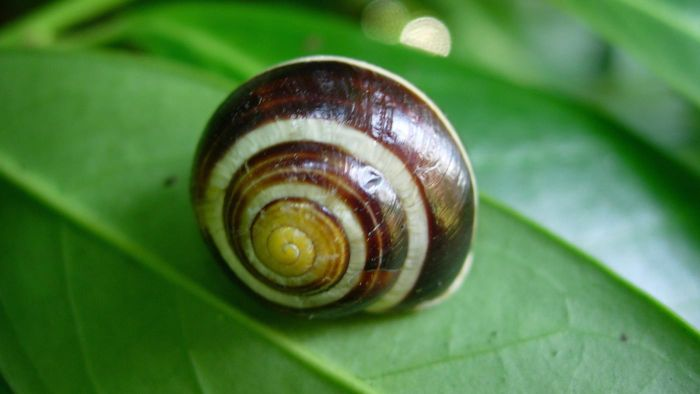 What Are Characteristics Shared by All Molluscs?