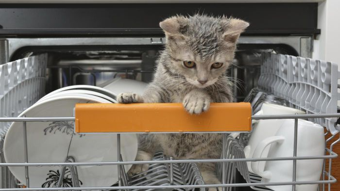 How Do You Clean a Dishwasher With Vinegar?