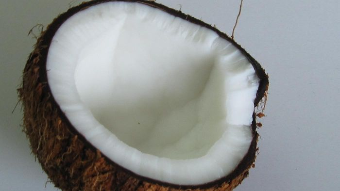 Do Coconuts Have Seeds?