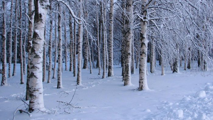 What Is the Coldest Country in Europe?