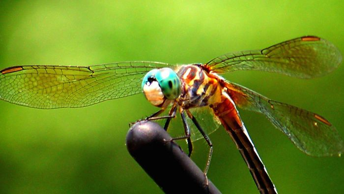 What Color Is a Dragonfly?