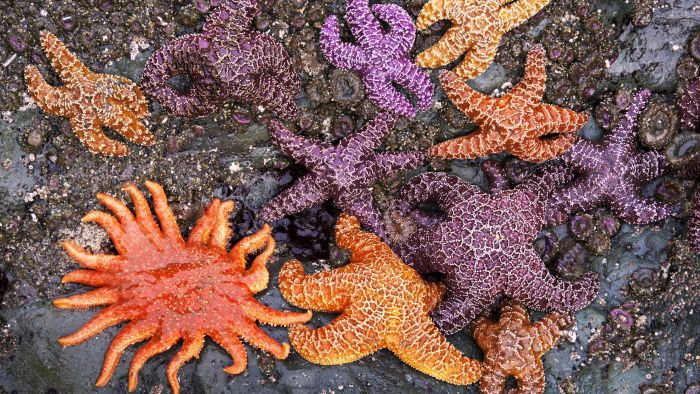 What Color Are Starfish?