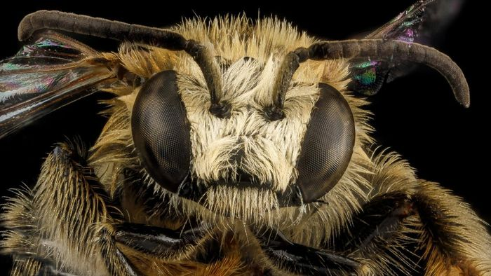 What Are Compound Eyes?
