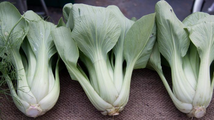 How Do You Cook Bok Choy?
