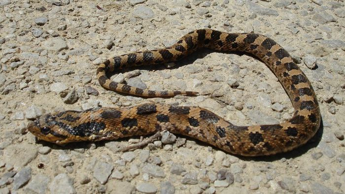 Which Countries Have No Native Snakes?