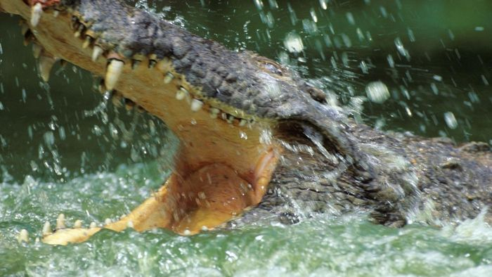 Why do crocodiles live in water?