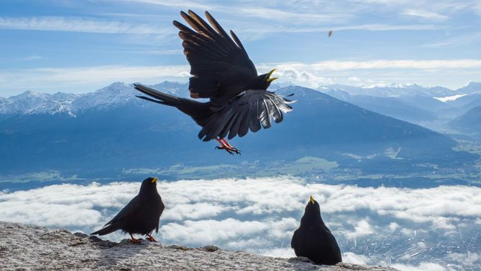 Why Do Crows Gather?