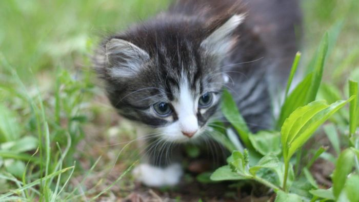 What Are Some Cute Names for Girl Kittens?