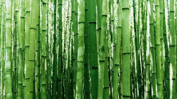 How Do You Take Cuttings From Bamboo?