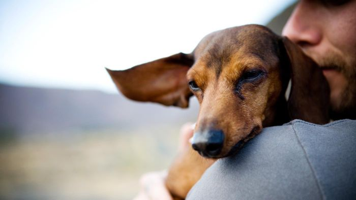 Why Do Dachshunds Have Seizures?