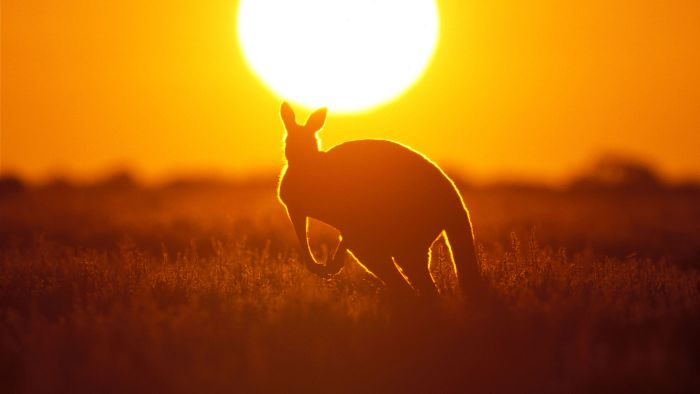 What Is the Most Deadly Australian Animal?
