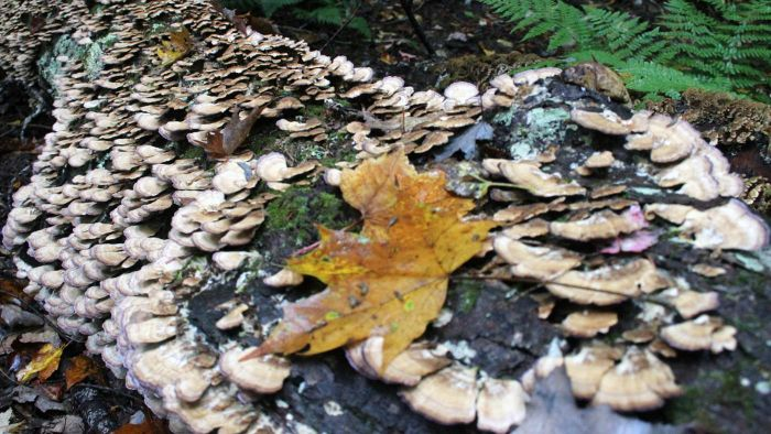 Why Are Decomposers Important?