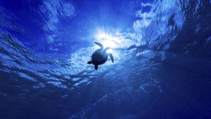What is the deepest ocean in the world?