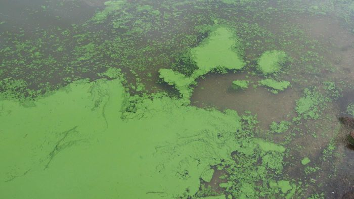 "What Is the Definition of ""algal Bloom""?"