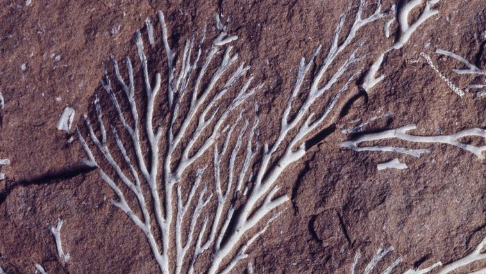 When Did Plant Life Begin to Appear on Earth?