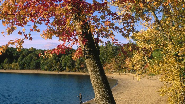 Why Did Thoreau Leave Walden Pond?
