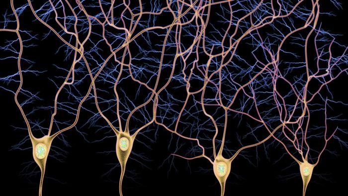 What Is the Difference Between Afferent and Efferent Neurons?