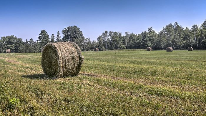 What is the difference between hay and silage?