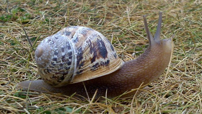 What Is the Difference Between a Snail Vs. a Slug?