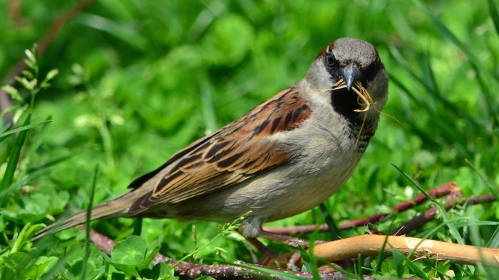 What Is the Difference Between a Sparrow and a Swallow?