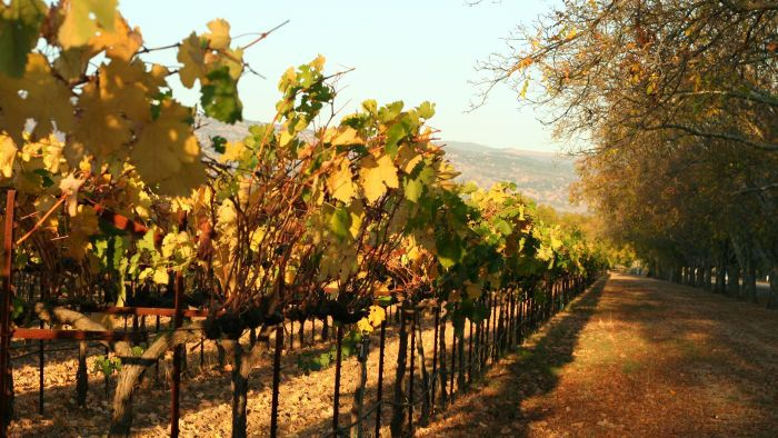 What Is the Difference Between Wines Grown in Warmer Vs. Cooler Climates?