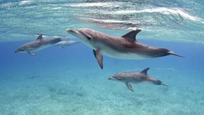 What Are the Different Classifications of Dolphins?