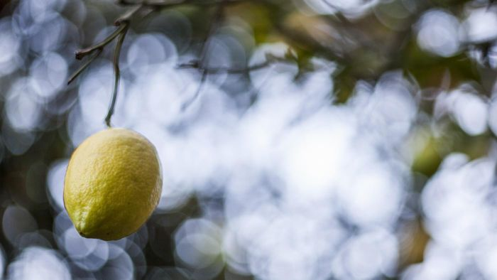 What diseases can affect a lemon tree?