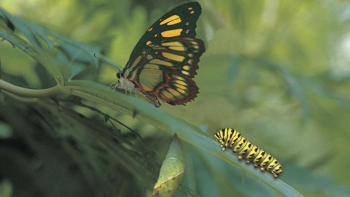 Do All Caterpillars Turn Into Butterflies?