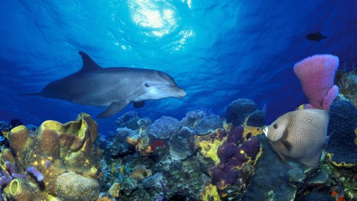 Do Dolphins Live in Coral Reefs?