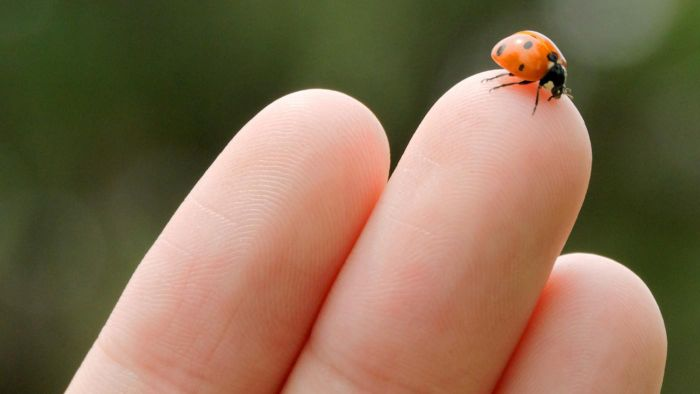 Do Ladybugs Bite?