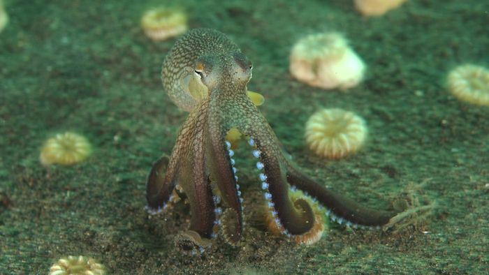 Do Octopuses Have Teeth?
