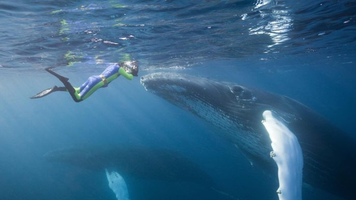 Do whales eat people?