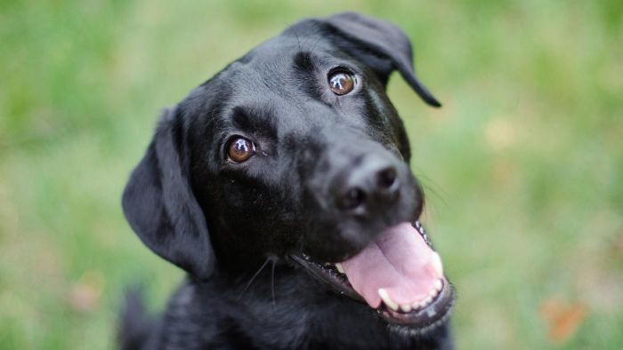 What Dog Breed Is Suitable for Families With Small Children?