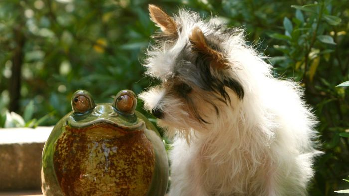 What Do I Do If My Dog Licks a Toad?