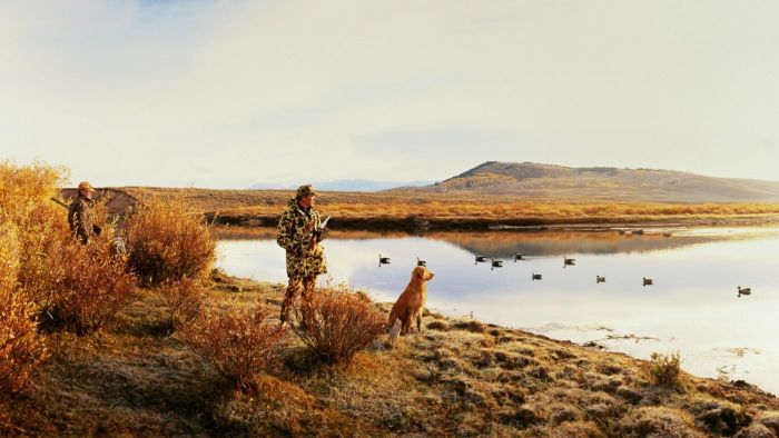 What Are the Best Dogs for Waterfowl Hunting?