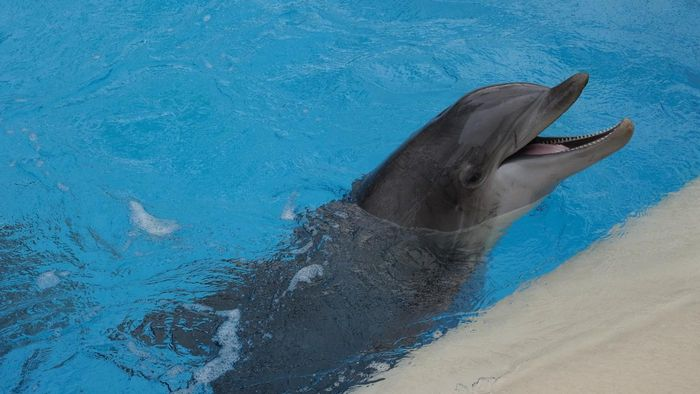 What Does the Dolphin Symbolize?