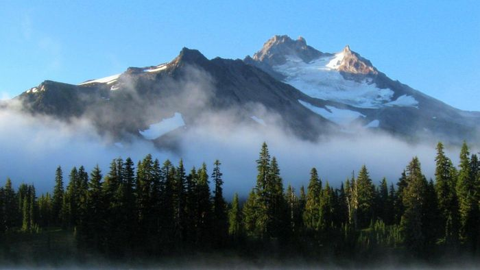 Why Don't Trees Grow Above the Timberline?