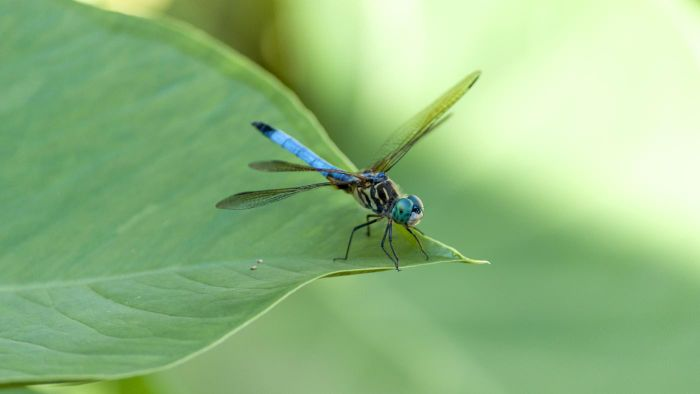 Where Do Dragonflies Live?