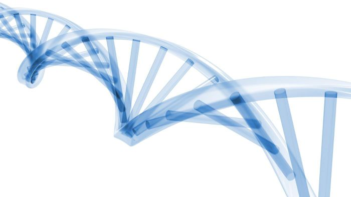 During Which Stage of the Cell Cycle Does DNA Replication Occur?