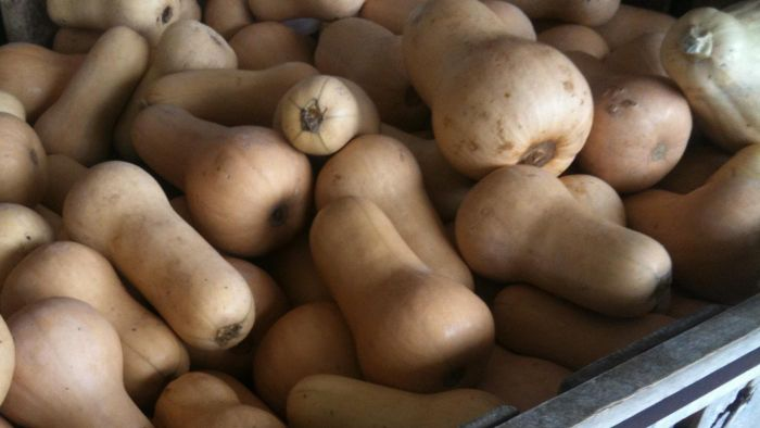 What Are Some Easy Butternut Squash Recipes?