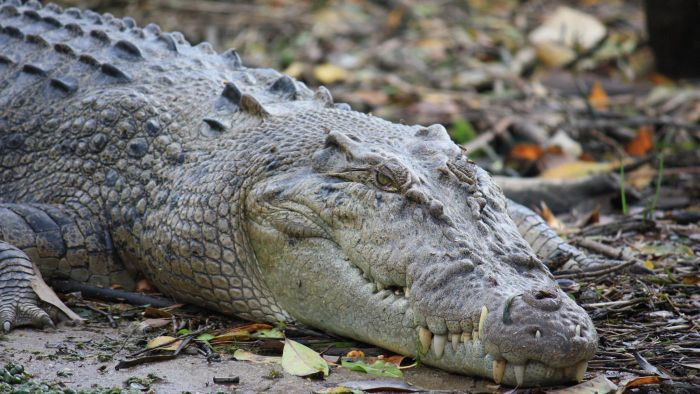 What Eats Crocodiles?