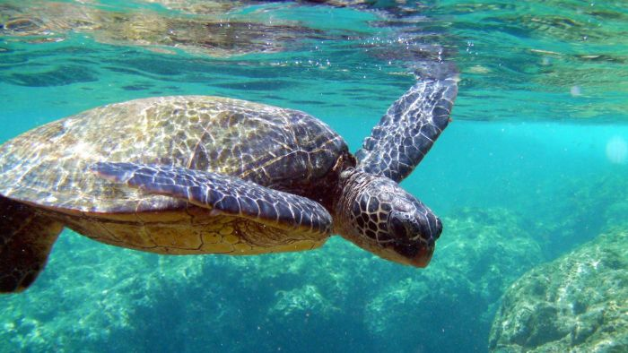 What efforts are in place to protect sea turtles?