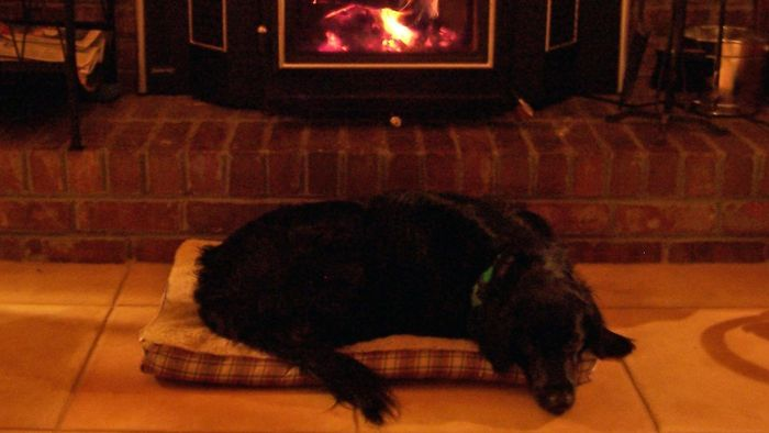 Is There an Energy Assistance Program If You Have Wood Heat?