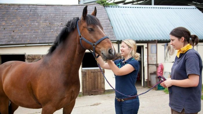 What Are Equine Chiropractic Schools?