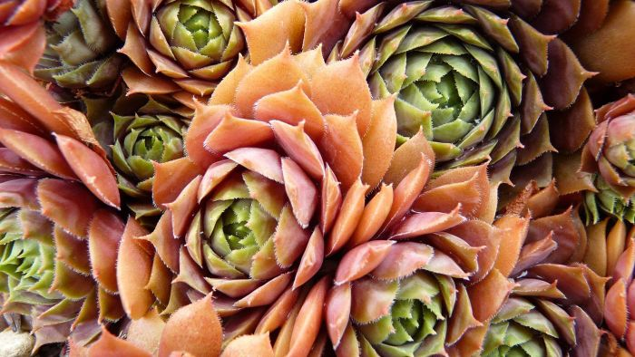 What Are Some Examples of Colorful Succulents to Plant Together?