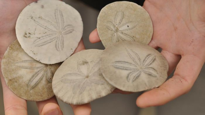 What Are Some Examples Of Echinodermata Reference
