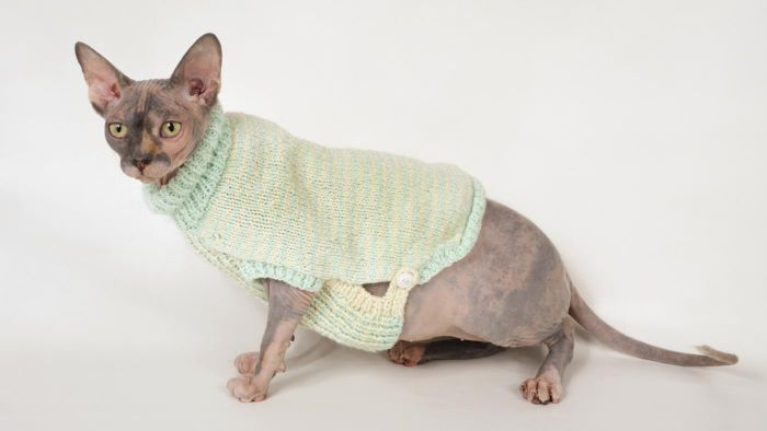 What Are Examples of Sphynx Cat Clothes?